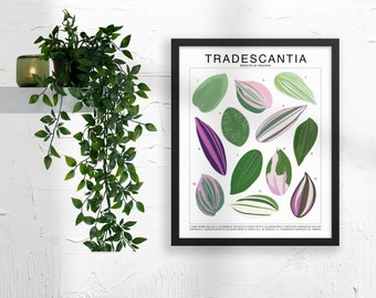 Handmade Moss Board for shingling Plant Species 3x15