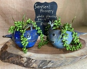 Wheel-thrown and Hand-altered and Glazed Blue Whale Small Succulent Planter Flower Pot Container   Handmade Gift for Plant Lovers