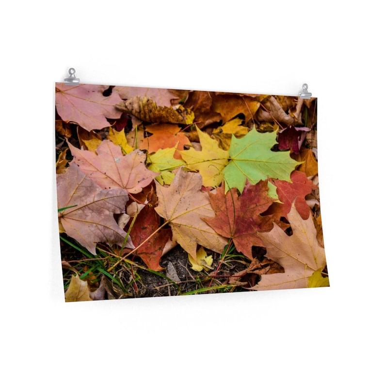 Colorful Leaves Nature Photography Leaf Cluster Leaf Montage Poster Print Fallen Leaves