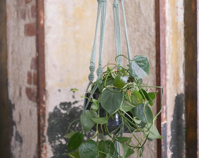 Featured listing image: Macrame Flower Light Planthanger