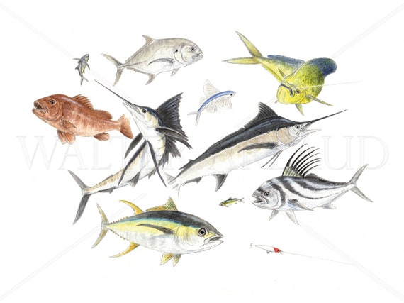 Big game fishing, printing, watercolor, fish, fishing art, fishing table, gift, home and décor, sea fishing, sport fishing