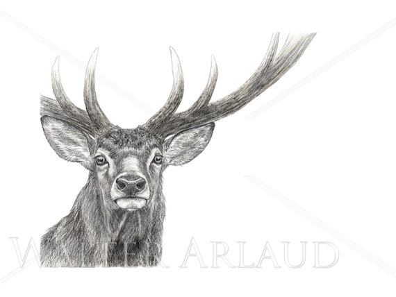 Portrait Deer, print, drawing, watercolor, gift, animal painting, animal art, house and decoration