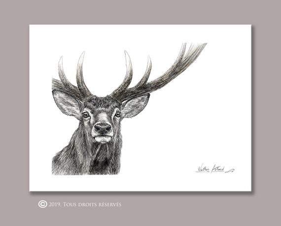 Portrait Deer, printing, drawing, watercolor, gift, animal painting, animal art, house and decoration