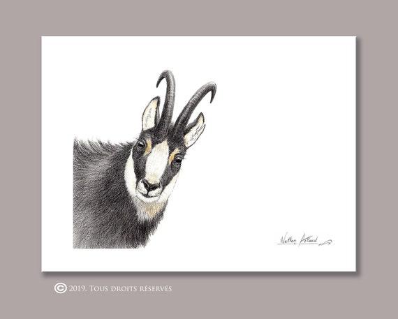 Chamois portrait, printing, drawing, watercolor, animal art, animal painting, art, decoration, mountain animals