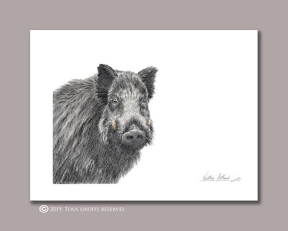 Boar portrait, printing, drawing, watercolor, animal art, animal painting, art, decoration, mountain animals
