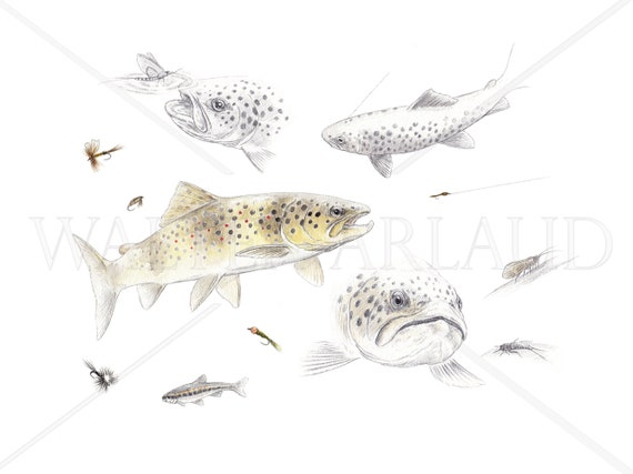 Study Trout fario, printing, watercolor, drawing, fisherman's gift, fishing table, fishing art, decoration, animal art