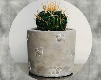 Cactus planting kit with living plant - Sass and Belle mini cement bee planter