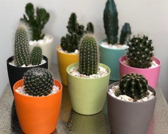 Cactus Planting Kit Gift - Magnetic Mini Planters