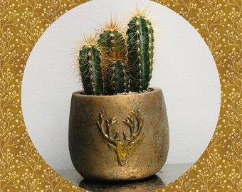 Cactus Planting Kit - Gold Stag Deer Head Concrete Planter