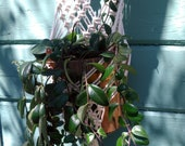 Macrame Plant Hanger, Diamonds