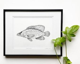 Fish linocut, Barramundi Cod print, Original Linocut print, Marine life art, Unframed print