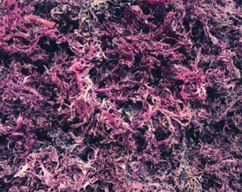 Jamaica Purple Sea Moss, 1 LB Wildcrafted | Raw Organic Seamoss