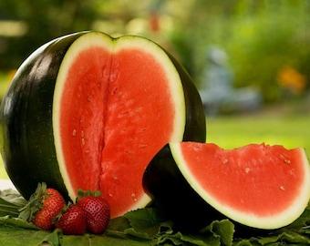 Heirloom Sugar Baby Watermelon Seeds