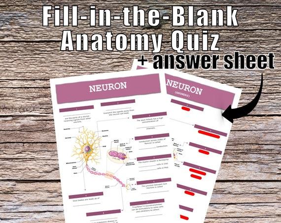 Neuron Anatomy QUIZ Worksheet + Answers