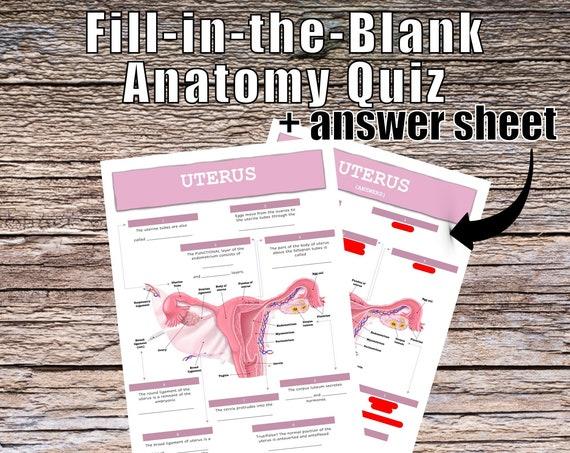 Uterus Anatomy QUIZ Worksheet + Answers