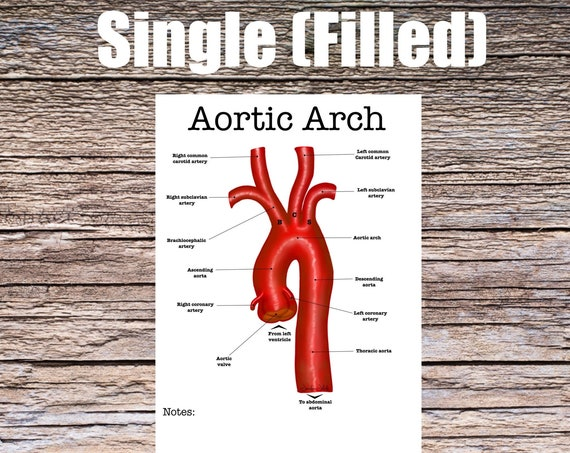 Aortic Arch Anatomy Worksheet (SINGLE FILLED)