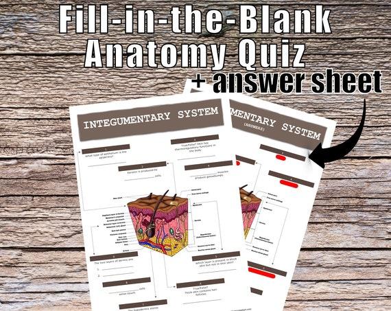 Integumentary System Anatomy QUIZ Worksheet + Answers