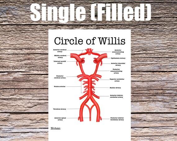 Circle of Willis Anatomy Worksheet (SINGLE FILLED)