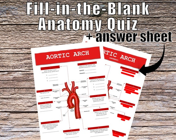 Aortic Arch Anatomy QUIZ Worksheet + Answers