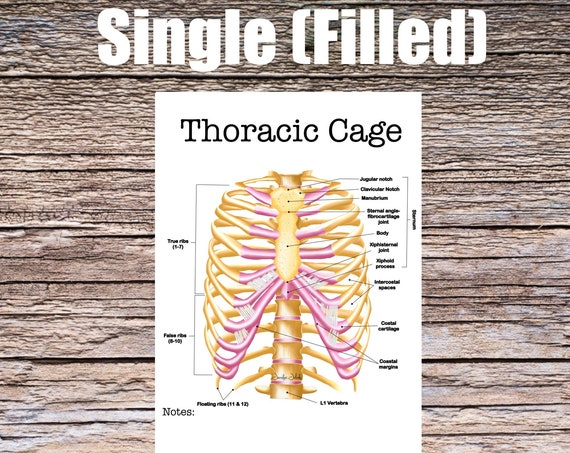 Thoracic Cage Anatomy Worksheet (SINGLE FILLED)