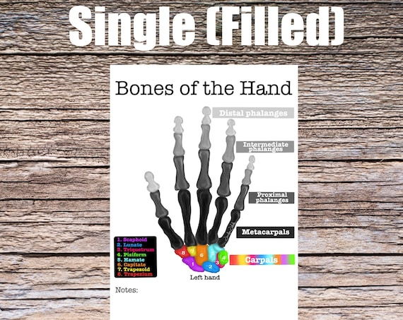 Bones of the Hand Anatomy Worksheet (SINGLE FILLED)