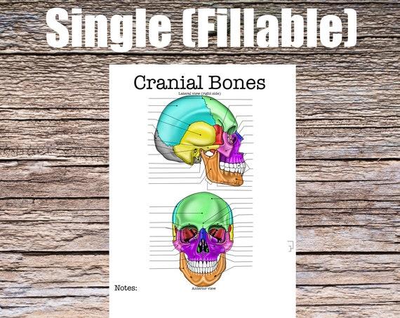 Cranial Bones Anatomy Worksheet (SINGLE FILLABLE)