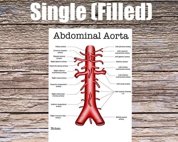Abdominal Aorta Anatomy Worksheet (SINGLE FILLED)