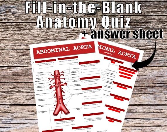 Abdominal Aorta Anatomy QUIZ Worksheet + Answers