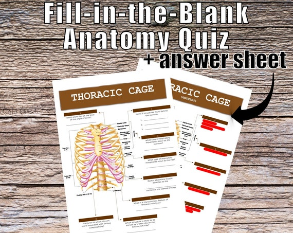 Thoracic Cage Anatomy QUIZ Worksheet + Answers
