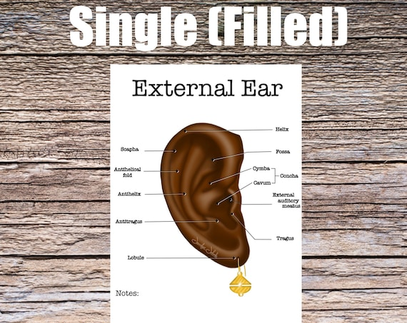 External Ear Anatomy Worksheet (SINGLE FILLED)