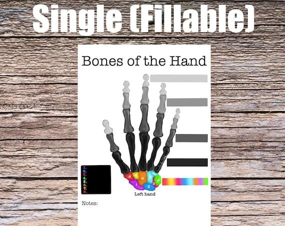 Bones of the Hand Anatomy Worksheet (SINGLE FILLABLE)