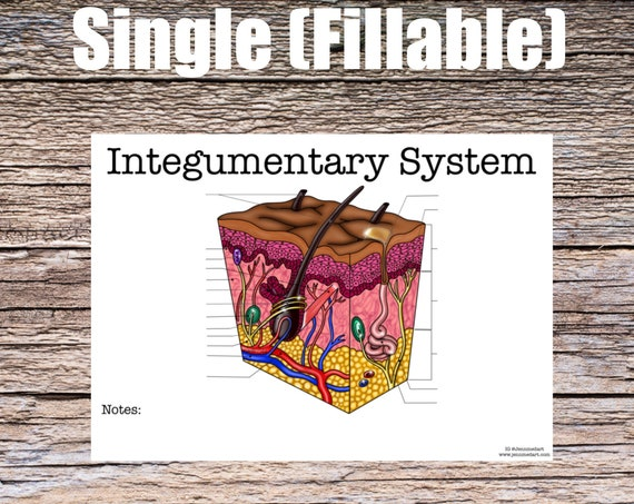 Integumentary System (SINGLE FILLABLE)