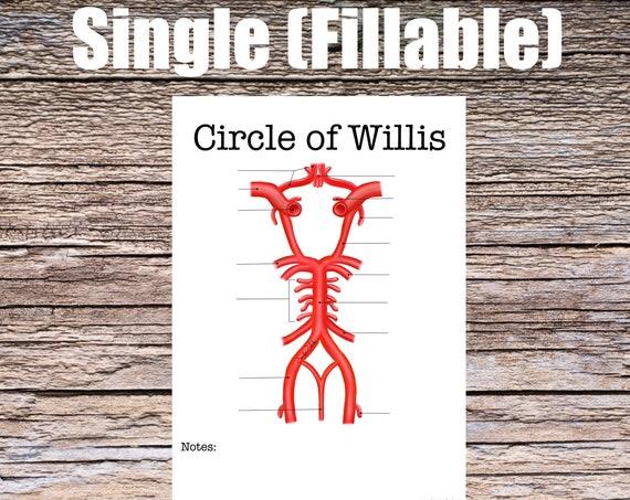 Circle of Willis Anatomy Worksheet (SINGLE FILLABLE)