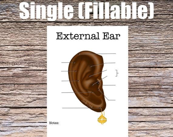 External Ear Anatomy Worksheet (SINGLE FILLABLE)