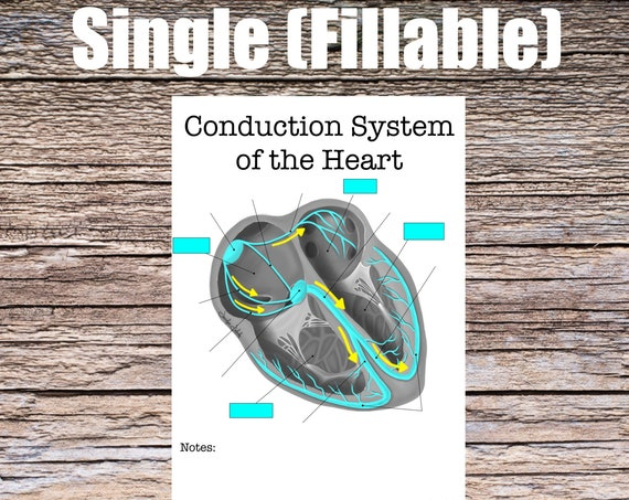 Conduction System of the Heart Anatomy (SINGLE FILLABLE)
