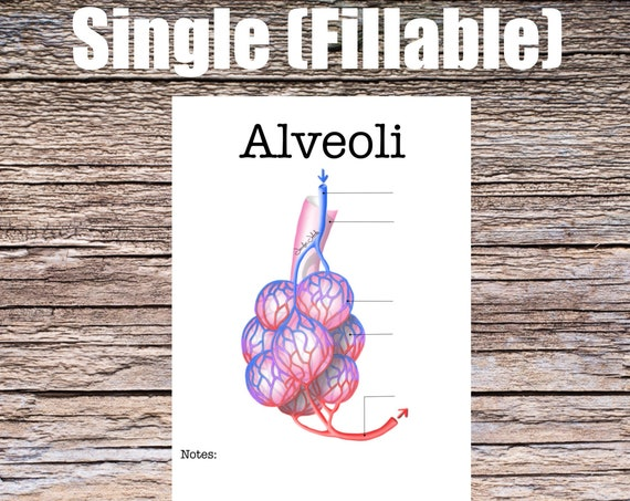 Alveoli Anatomy Worksheet (SINGLE FILLABLE)