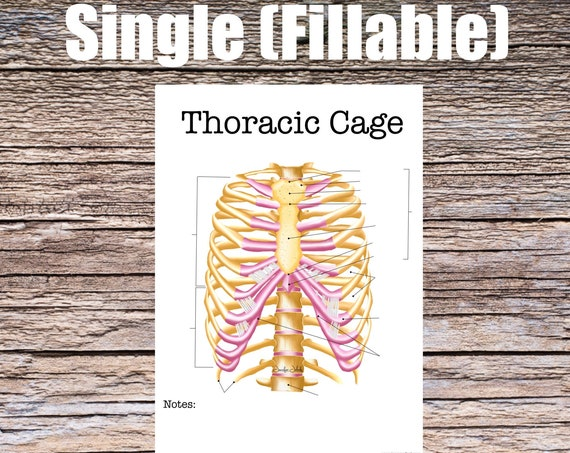Thoracic Cage Anatomy Worksheet (SINGLE FILLABLE)