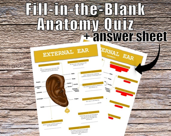 External Ear Anatomy QUIZ Worksheet + Answers