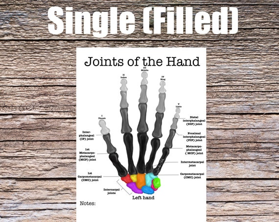 Joints of the Hand Anatomy Worksheet (SINGLE FILLED)