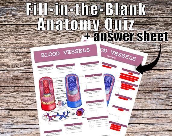Blood Vessels Anatomy QUIZ Worksheet + Answers