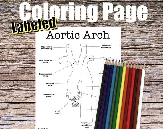 Aortic Arch Anatomy Coloring page (LABELED)