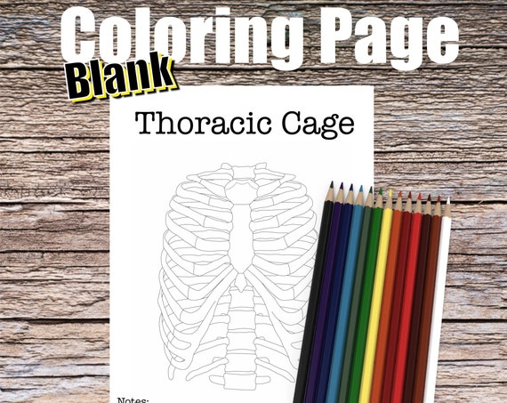 Thoracic Cage Anatomy Coloring page (BLANK)