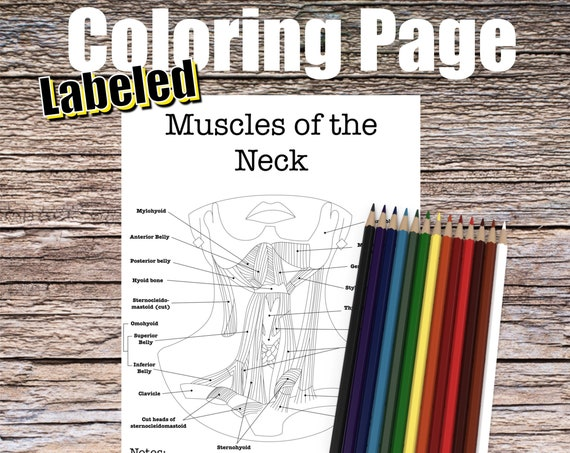 Muscles of the Neck Anatomy Coloring page (LABELED)