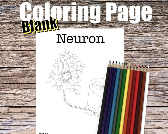 Neuron Anatomy Coloring page (BLANK)