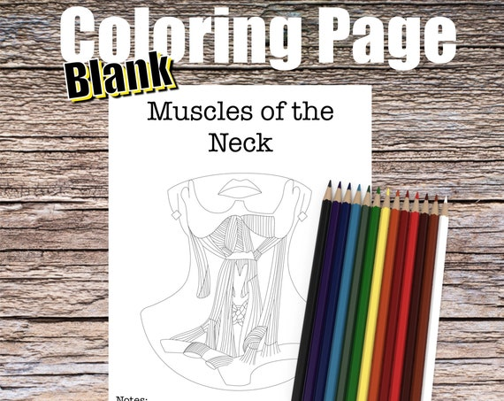 Muscles of the Neck Anatomy Coloring page (BLANK)