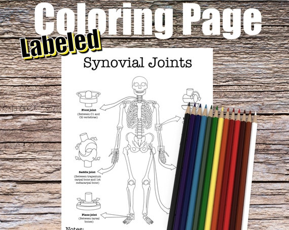 Synovial Joints Anatomy Coloring page (LABELED)