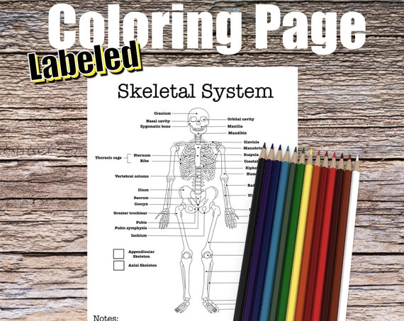 Skeletal System Anatomy Coloring page (LABELED)