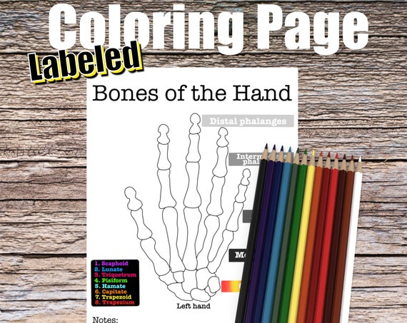 Bones of the Hand Anatomy Coloring page (LABELED)