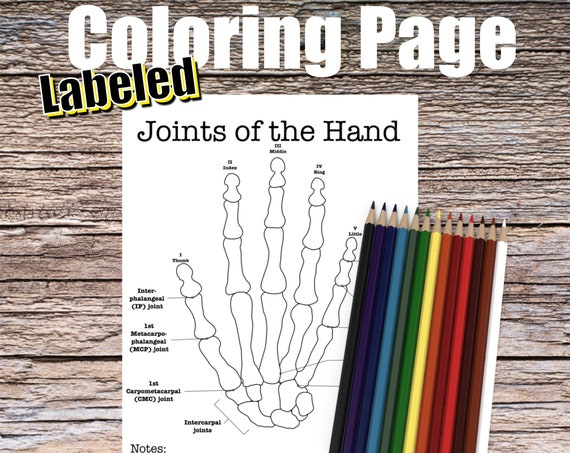 Joints of the Hand Anatomy Coloring page (LABELED)
