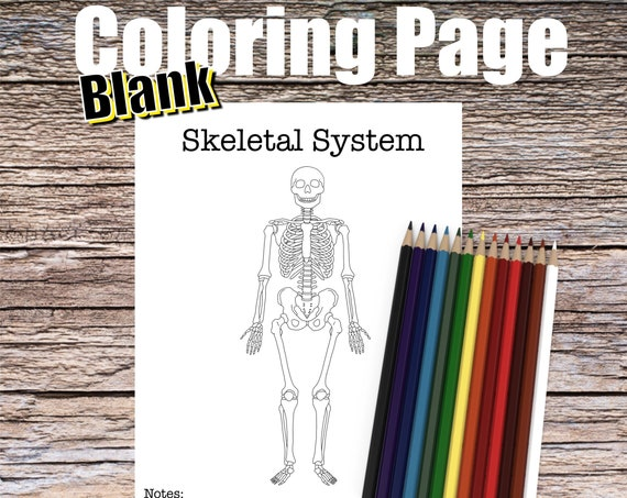 Skeletal System Anatomy Coloring page (BLANK)